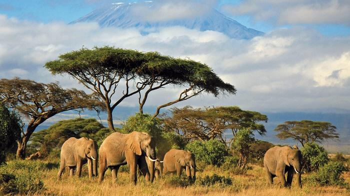 séjour au Kenya