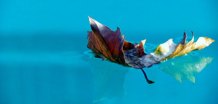 Comment traiter l eau de votre piscine hors sol for Eau verte piscine hors sol