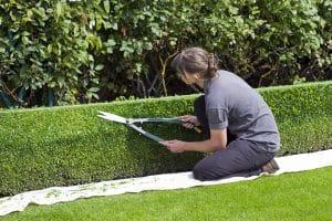 paysagiste entretien jardin