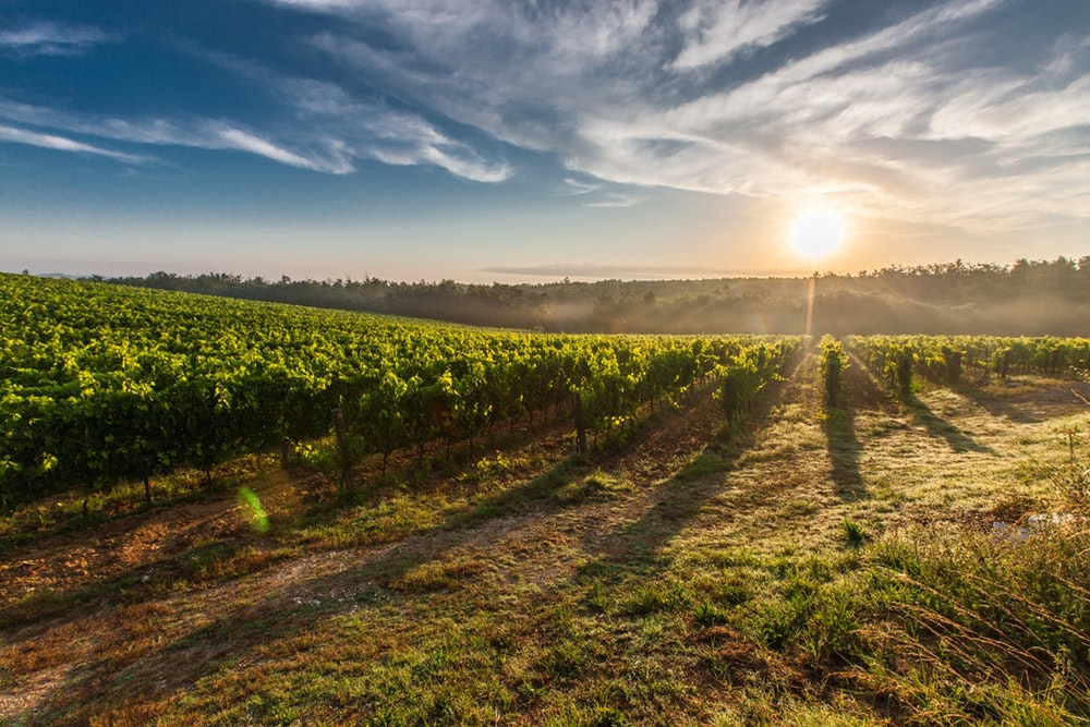 vin terre