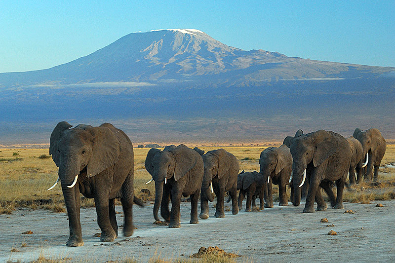 Elephants parc national Amboseli et mounts Kilimanjaro