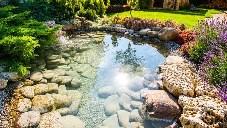 Le bassin de jardin est un petit espace naturel et esthétique